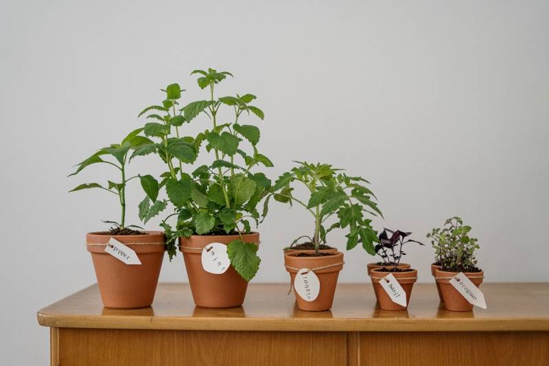 Plant and vegetable garden for home decor