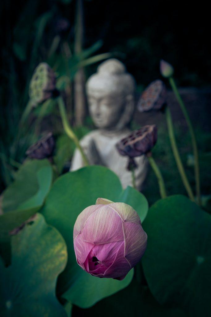 Lotus Longings: The Making of this ethereal motif